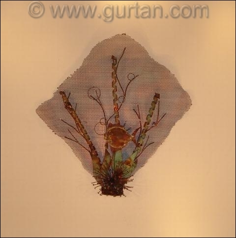 Sea Fan Autdoor Metal Wall Art Single